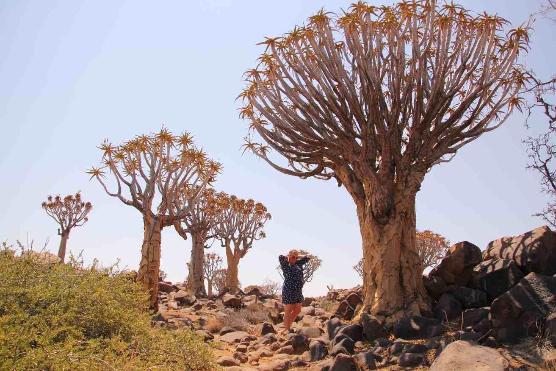 Baobab, Baum, Namibia