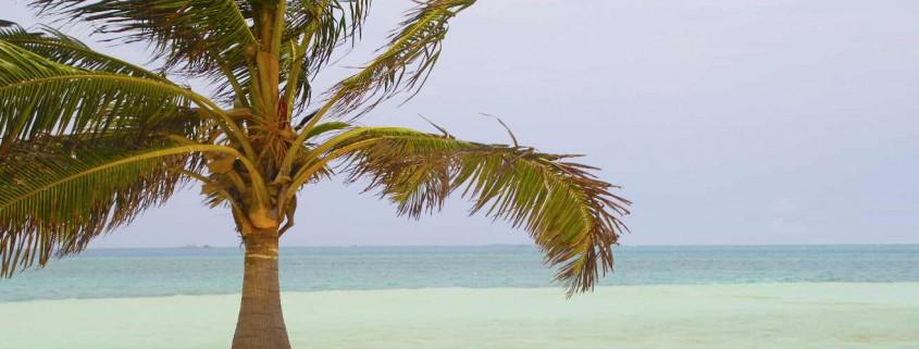 Palme, Strand, Meer