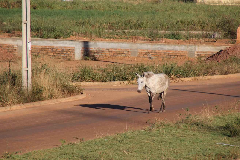Pferd Brasilien