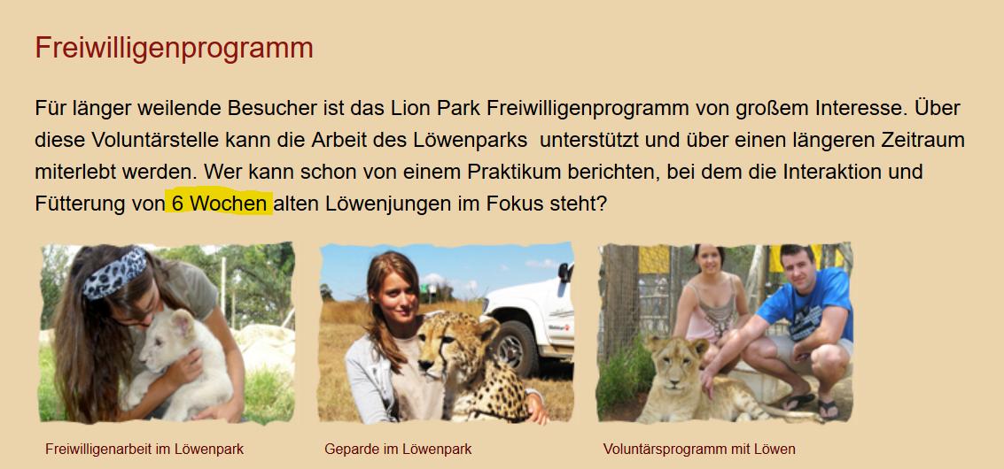 Löwen_Volunteers